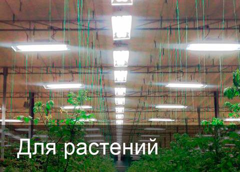 индукционные лампы для растений, индукционные светильники