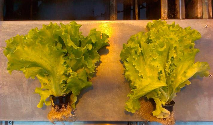 Светодиодные светильники для растений АтомСвет БИО
