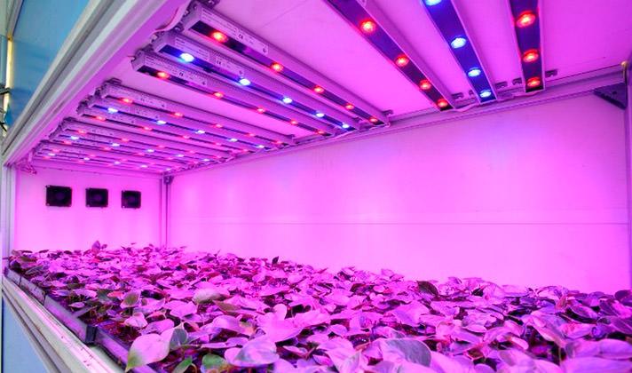 Тепличные светодиодные светильники для растений АтомСвет БИО