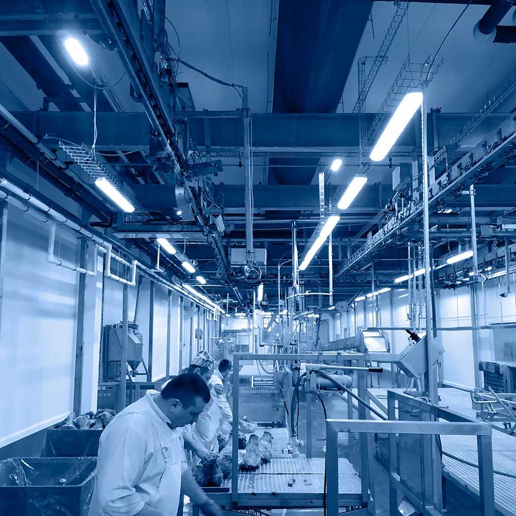 Свиноводческий комплекс БелДан построил в нескольких регионах несколько крупных ферм по выращиванию свинины по датской технологии, а также мясоперерабатывающий завод под Барановичами. Группа компаний Элреди освещала объекты целиком, разрабатывала проект освещения и проводила авторский надзор. Применены светодиодные светильники ledz, SVT, АтомСвет. Вам нравится результат нашей работы? Звоните нам!